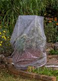 用织品盖的植物作为保护反对霜 免版税图库摄影
