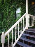 用绿色常春藤盖的一个老房子的入口 库存照片