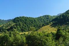 用绿色森林和明白蓝天盖的青山 库存照片