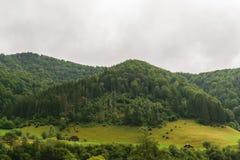 用绿色森林和风雨如磐的灰色多云天空盖的青山 库存图片