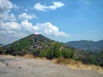 用绿色灌木小山盖在一晴朗的热的天 免版税库存照片