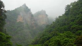 用绿色豪华的常青雨林盖的山岩石在雾的雨下 股票录像