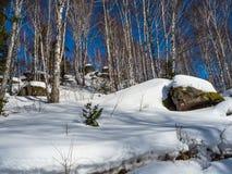 用绿色青苔和白雪和杉木和桦树盖的石头在冬天森林里在阿尔泰,俄罗斯 库存图片