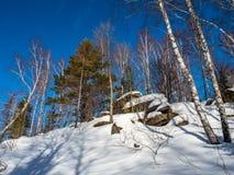 用绿色青苔和白雪和杉木和桦树盖的石头在冬天森林里在阿尔泰,俄罗斯 免版税库存图片