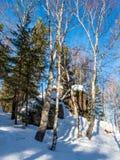 用绿色青苔和白雪和杉木和桦树盖的石头在森林里在阿尔泰,俄罗斯 免版税库存图片