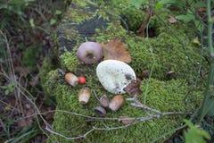 用绿色青苔盖的老树桩 自然环境,在树桩橡子,蘑菇 库存图片