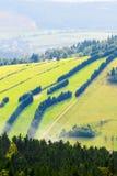 用绿草和云杉的树报道的小山倾斜在猫头鹰山, Sudetes,波兰 图库摄影