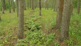 用绿草和树其次盖的德国沟槽在俄国森林里在超过在世界大战以后的70年以后 影视素材