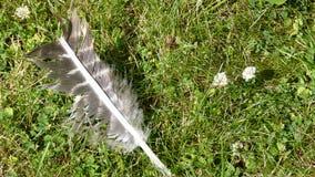 用羽毛装饰不理智 图库摄影