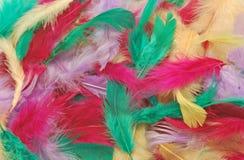 用羽毛装饰多色 免版税图库摄影
