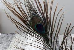 用羽毛装饰孔雀 背景黑色深度用羽毛装饰域浅白色 五颜六色的孔雀羽毛 羽毛纹理 免版税库存照片