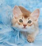 用羽毛装饰小猫 免版税库存照片