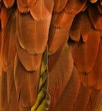 用羽毛装饰桔子 免版税库存图片
