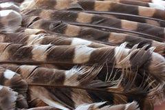 用羽毛装饰猫头鹰 库存图片