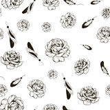 用羽毛装饰玫瑰 库存照片
