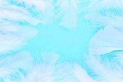 用羽毛装饰白色 库存图片