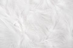 用羽毛装饰白色 免版税库存图片