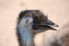 用羽毛装饰的大鸸鸟外形 免版税库存照片