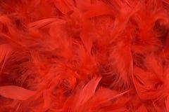 用羽毛装饰红色 库存照片