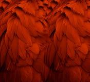 用羽毛装饰红色 免版税图库摄影