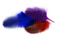 用羽毛装饰隐蔽全身羽毛 免版税库存照片