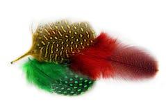 用羽毛装饰隐蔽全身羽毛 免版税图库摄影
