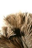 用羽毛装饰驼鸟 库存照片
