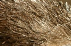 用羽毛装饰驼鸟 免版税库存照片