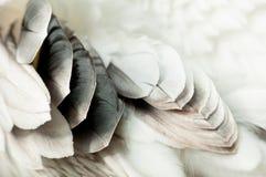 用羽毛装饰鹈鹕 免版税库存照片