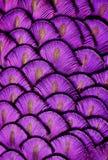 用羽毛装饰紫色 免版税图库摄影