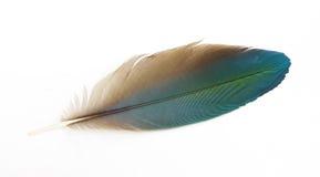 用羽毛装饰prinnie 免版税库存图片