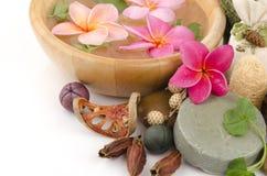 用肥皂擦洗Gotu可拉树(Centella asiatica (L.)都市。) 免版税库存图片