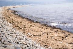 用腐烂的海藻盖的黑海海滩 黑海海岸,新罗西斯克,俄罗斯 免版税图库摄影