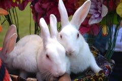 用花装饰的兔子 免版税图库摄影