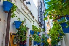 用花装饰的典型的安达卢西亚的庭院在市科多巴,西班牙 免版税图库摄影
