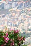 用花装饰的城市 免版税库存图片