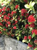 用花装饰的红色 免版税库存照片