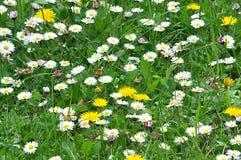 用花装饰的草甸在春天 图库摄影
