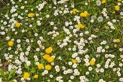 用花装饰的草甸春天细节  免版税图库摄影
