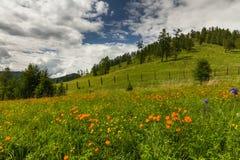 用花装饰的草甸的惊人的看法 库存图片