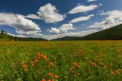 用花装饰的草甸的惊人的看法 免版税库存图片