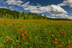 用花装饰的草甸的惊人的看法 库存照片
