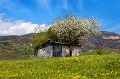 用花装饰的草甸的老之家 免版税库存图片