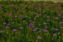 用花装饰的草甸 库存照片
