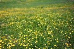 用花装饰的草甸 免版税库存图片