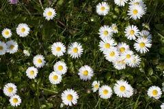用花装饰的草甸 免版税库存照片