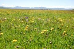 用花装饰的草甸 免版税图库摄影