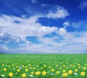 用花装饰的草甸 库存图片