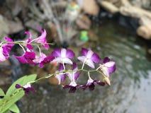 用花装饰的紫色 免版税库存图片