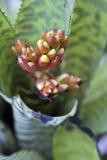 用花装饰的Bromeliad 免版税库存图片